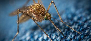 komar na tkaninie